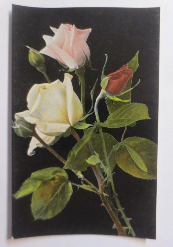Blumen, Rosen,   1910  ♥   (4150)