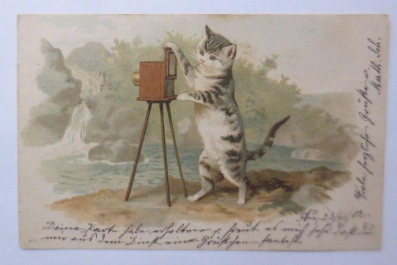 Katzen, Kamera, Fotoapparat,     1902 ♥  (394)