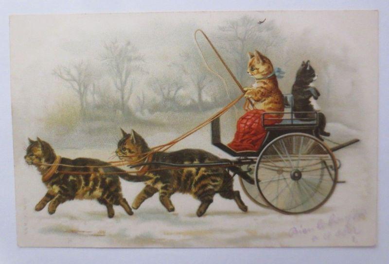 Katzen, Kutsche,    1902 ♥  (18968)