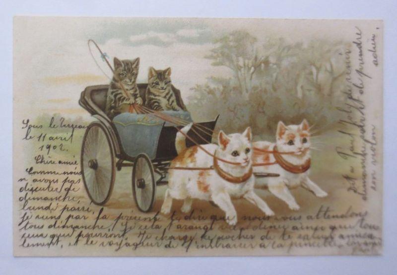 Katzen, Kutsche,    1902 ♥  (30450)