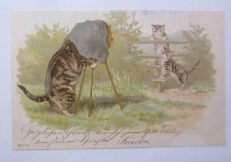 Katzen, Kamera, Fotoapparat,    1900 ♥  (16677)