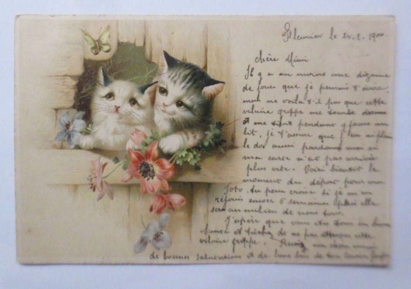 Katzen, Blumen, Schmetterling,   1900  ♥  (34148)
