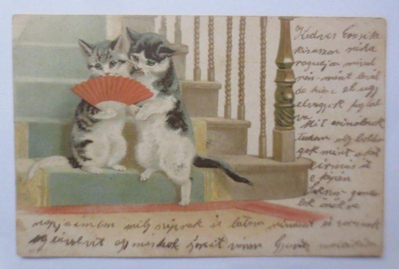 Katzen, Treppe, Fächer,   1901  ♥  (2177)
