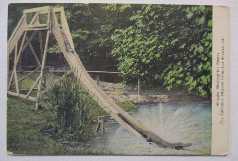 Krokodile Alligator Farm, Shooting the Shutes, ca.1930 (14822)