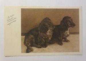 Hund, Dackel, Rauhaardackel,  1936 ♥ (70959)