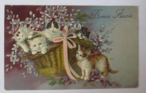 Katzen, Korb, Blumen,     1906, Prägekarte  ♥ (64542)