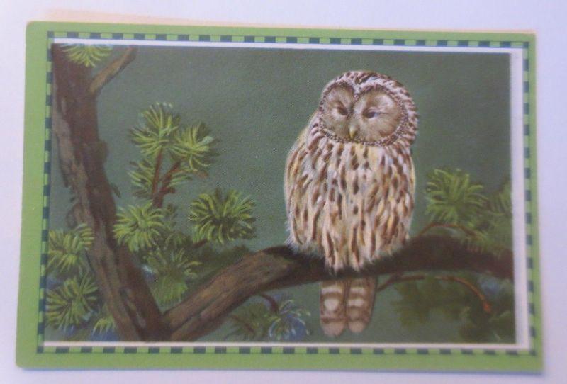 Chlorodont-Sammelbilder, Bild 7, Serie 4, Heimische Vögel, Zahnwerbung♥ (44283)