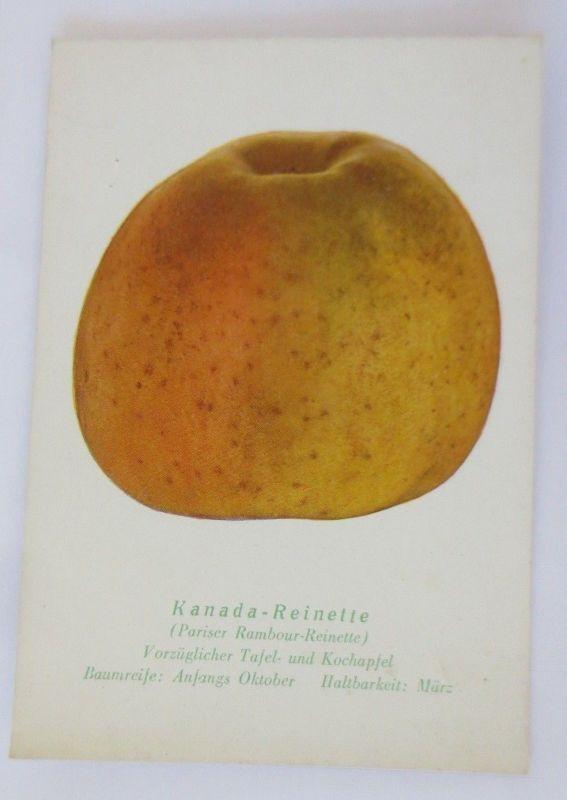 Obst, Früchte, Apfel, Kanada-Reinette, Pariser Rambour-Reinette, 1945 ♥ (68792)