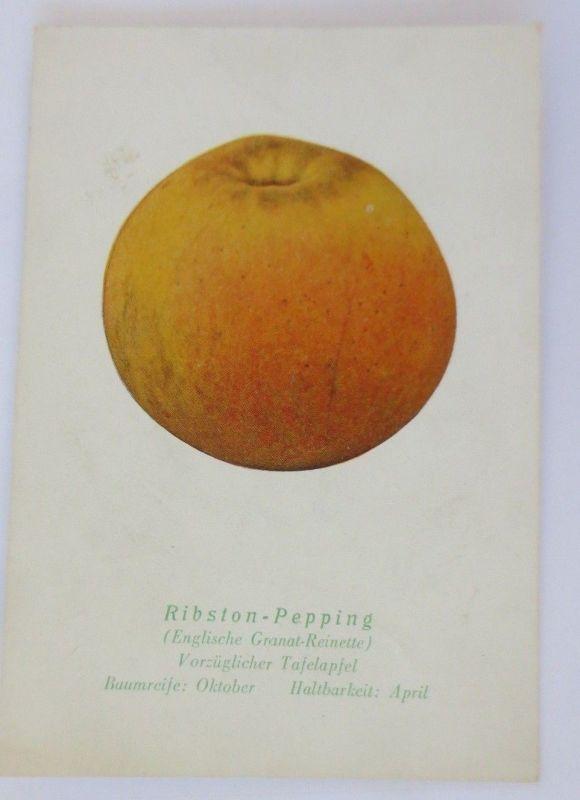 Obst, Früchte, Apfel, Ribston-Pepping, Englische Grant-Reinette 1945 ♥ (68791)