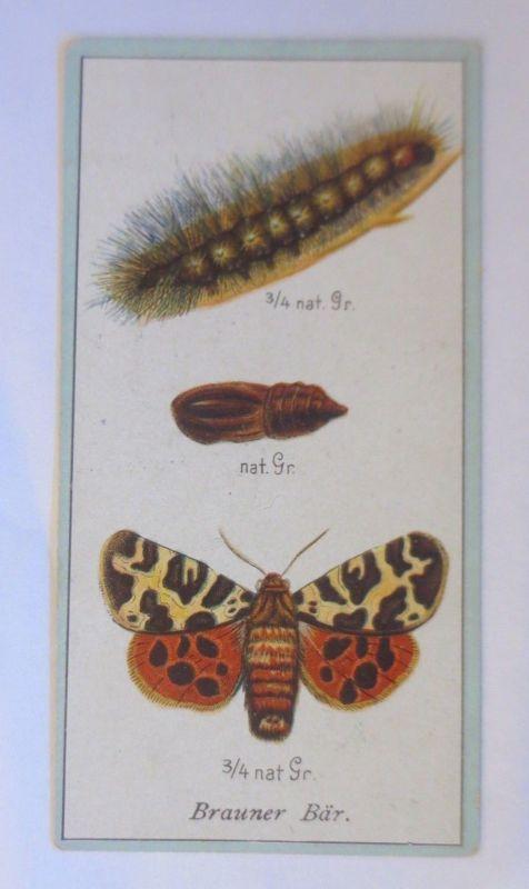 Stollwerck, Gruppe 17, Nr.4,  Brauner Bär, 1900 ♥ (45801)