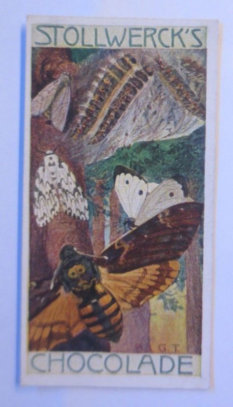 Stollwerck, Gruppe 292, Nr.4,  Album 6. Die Schmetterlinge II. 1900 ♥ (61247)