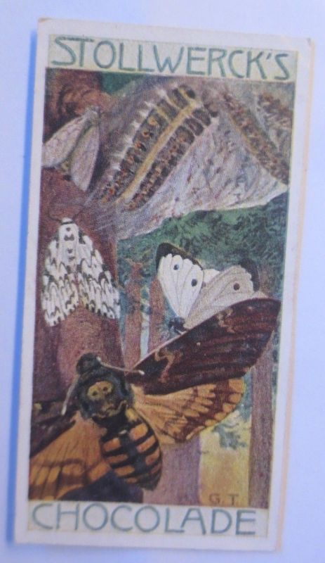 Stollwerck, Gruppe 292, Nr.4,  Album 6. Die Schmetterlinge II. 1900 ♥ (51270)