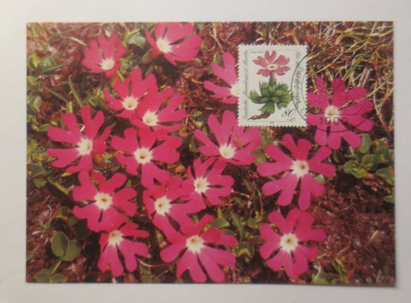 Maximumkarte  Gefährdete Alpenblumen  1983 ♥  (3762)