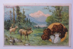 Kaufmannsbilder, Dr. Thompson Seifenpulver, Essbare Pilze ♥ (64122)
