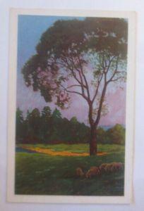 Künstlerkarte, Landschaft, Schafe, 1920, Meissner & Buch ♥ (18311)