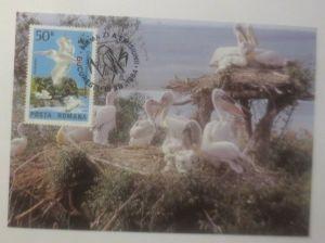 Maximumkarte Vogel  Krauskopfpelikan Posta Romana 1985   WWF ♥ (57161)