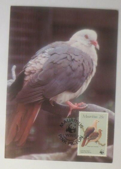 Maximumkarte Vogel  Die Mauritius-Taupe 1985   WWF ♥ (19677)