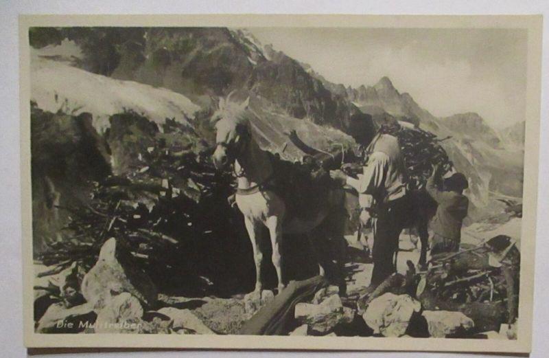 Holz Holzverarbeitung Pferde Holzsammler in den Bergen Fotokarte (72418)