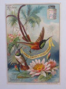 Liebig, Serie 384, Vögel u. Blumen, Kolibris, Nimphale  ♥