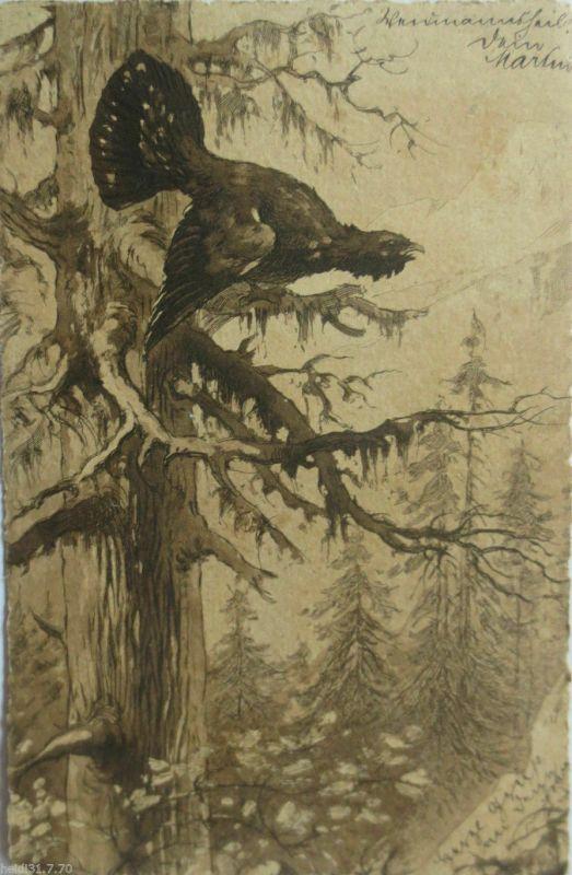 Auerhahn auf einem Baum 1901  ♥  (3942)