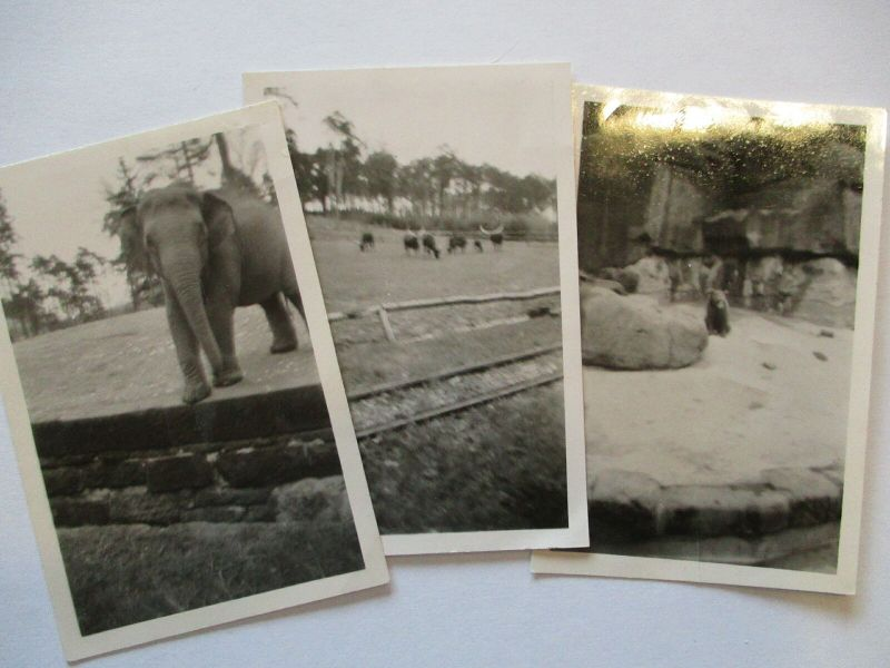 Zoo Nürnberg, 3 original Fotos 1941 u.a. Elefant (38565)