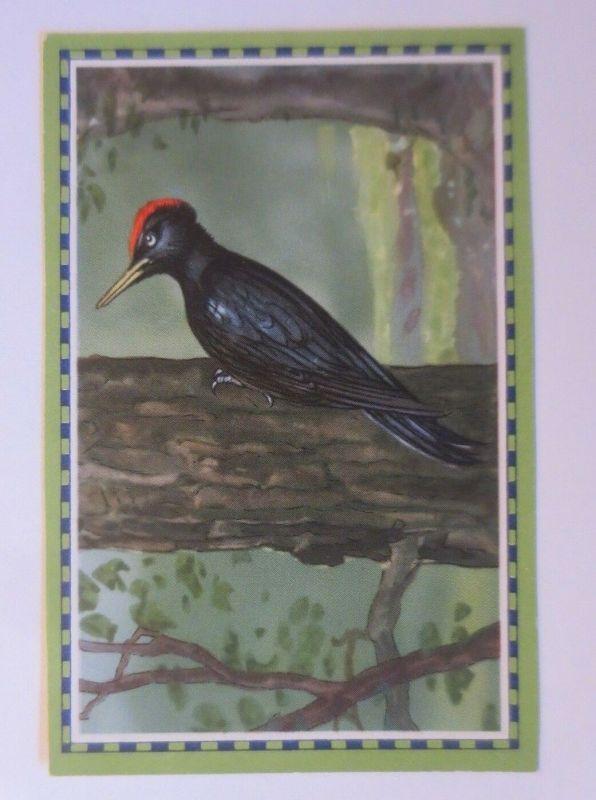 Chlorodont-Sammelbild, Heimische Vögel,  Zahnwerbung ♥ (24532)