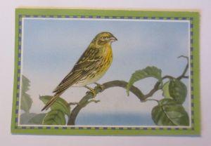 Chlorodont-Sammelbild, Heimische Vögel,  Zahnwerbung ♥ (64289)