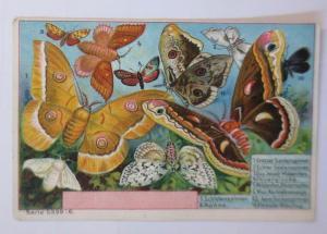 Kaufmannsbilder, Serie 5339 Nr. 6, Schmetterlinge ♥