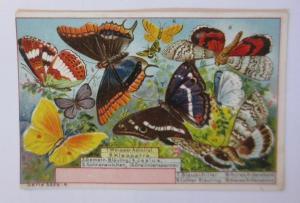 Kaufmannsbilder, Serie 5339 Nr. 4, Schmetterlinge ♥