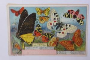 Kaufmannsbilder, Serie 5339 Nr. 3, Schmetterlinge ♥