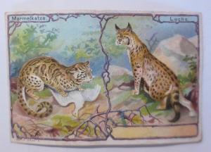 Kaufmannsbilder,  Aecht Franck, Kaffeezusatz, Marmelkatze, Luchs, 1900 ♥