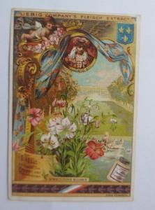 Liebig, Serie 258, Symbolische Blumen, Lilie ♥