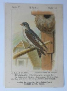 Kaufmannsbilder, Kasseler Hafer-Kakao-Fabrik, Vögel, Serie 5, Tafel 10 ♥