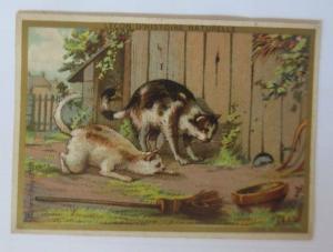 Kaufmannsbilder, Lecon D. Histoire Naturelle  1900  ♥