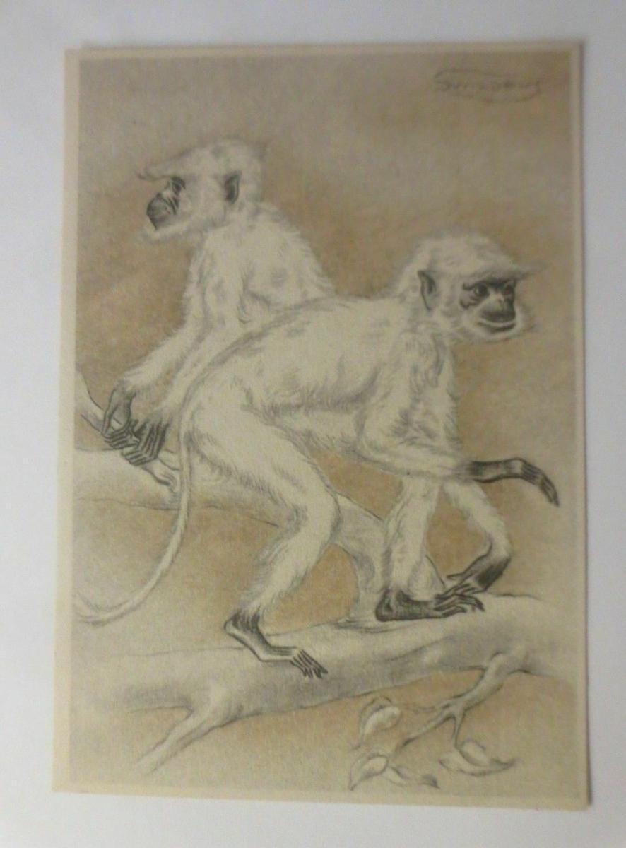 Affen, Baum,     1945, sig. Swilens ♥ 0