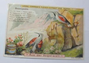 Liebig, Serie 481, Aus der Vogelwelt, Mauerspechte ♥