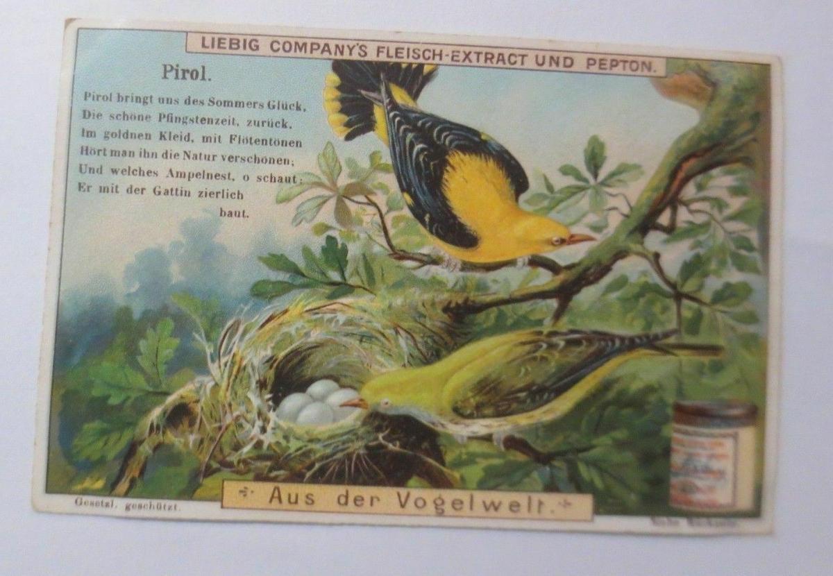Liebig, Serie 481, Aus der Vogelwelt, Pirol ♥ 0