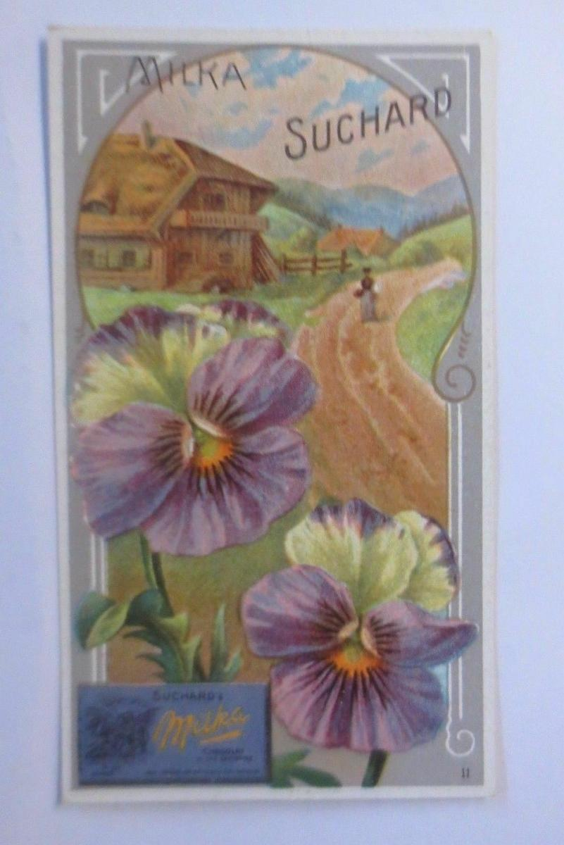 Kaufmannsbilder, Chocolat Suchard, Milka Velma, Blume, Noisettine, 1910 ♥ 0
