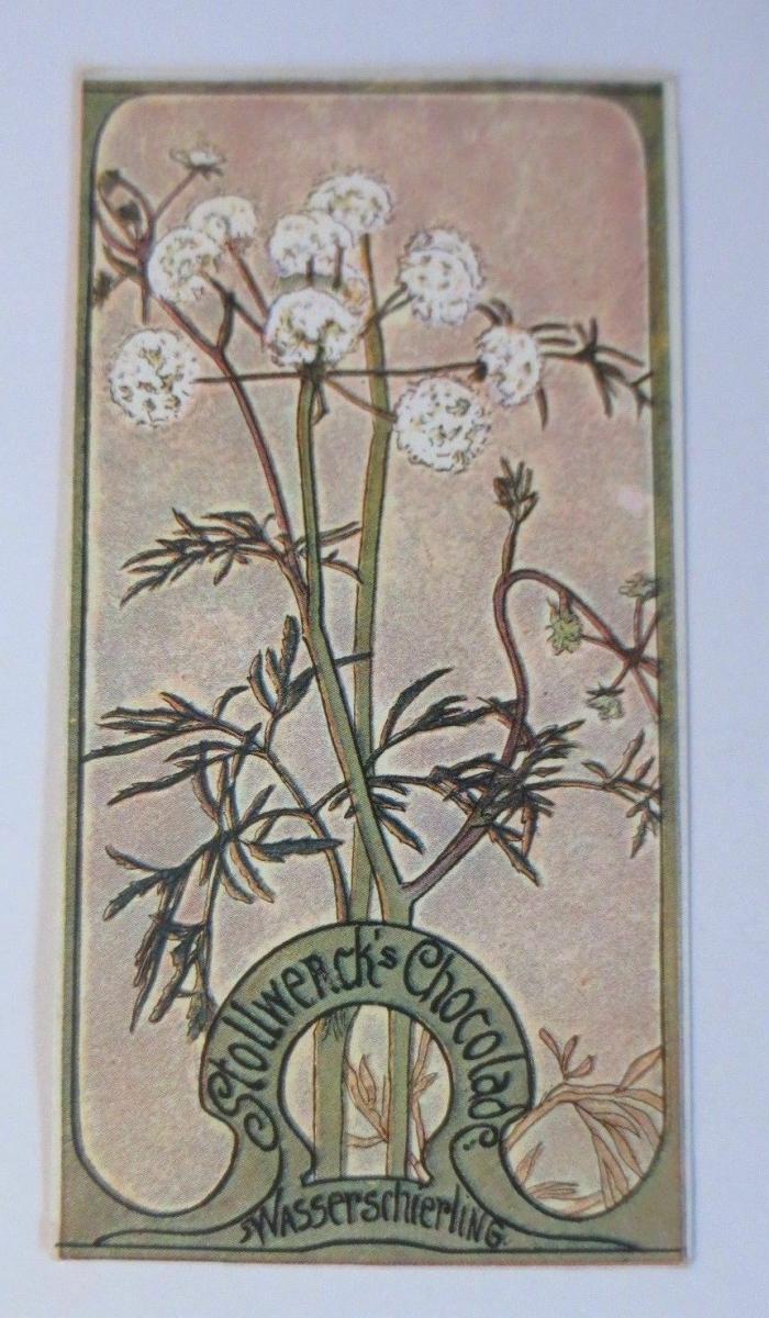 Stollwerck, Gruppe 171, Nr.2, Album ,Nr.4, Giftige Pflanzen   ♥ 0
