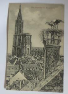 Die Störche in Strassburg, Elsas, 1910 ♥ (70137