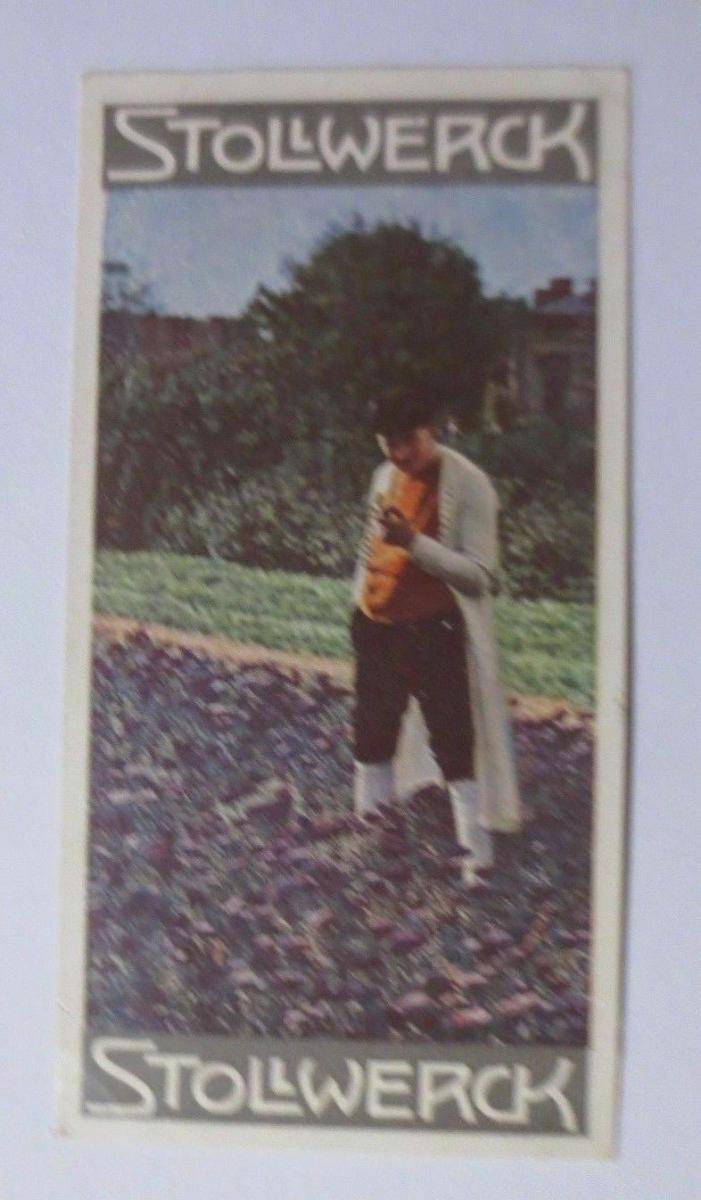 Stollwerck, Gruppe 330,  Nr.2,   Album  Nr.7,  Trachten I. ♥ 0