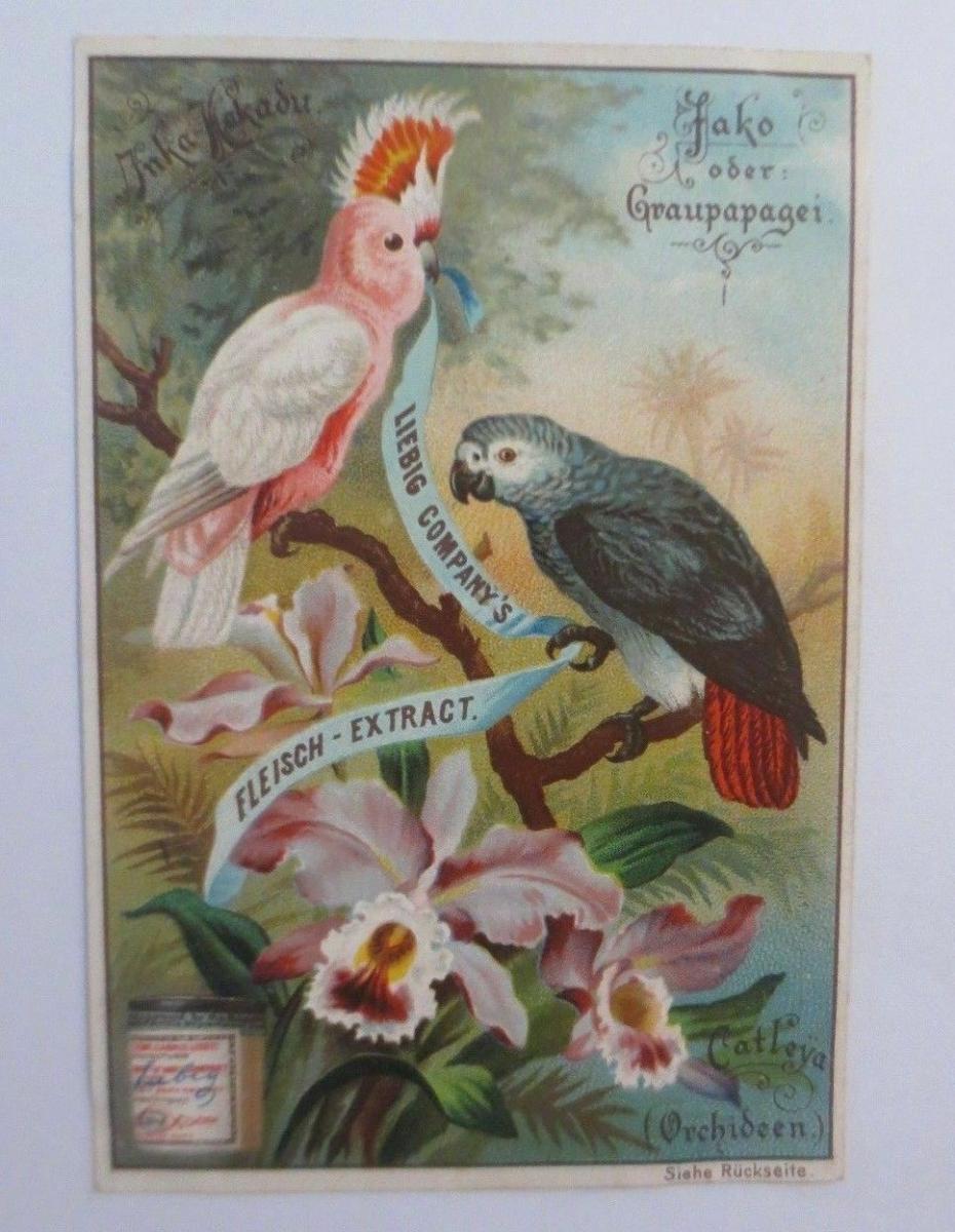 Liebig, Serie 384, Vögel u. Blumen, Jako oder Graupapagei, Orchideen ♥ 0
