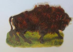 Oblaten, Büffel,   1900,  6 cm x 4 cm  ♥