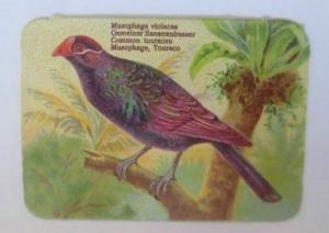 Oblaten, Vogel,  1900,  8,5 cm x 6 cm  ♥