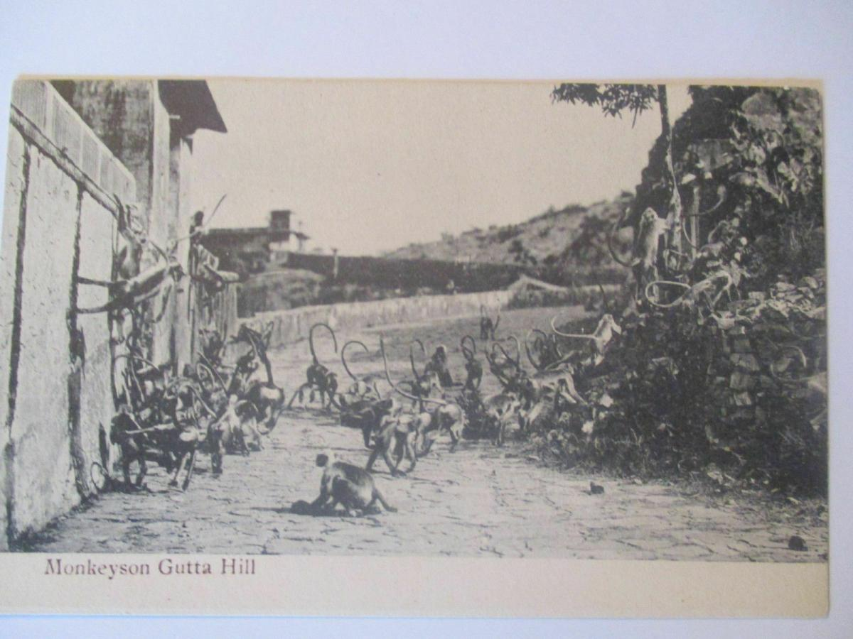 Affen, Monkeyson Gutta Hill, ca. 1910 0