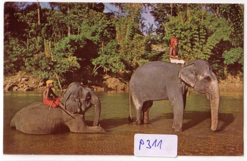 Kandy Ceylon Elefanten