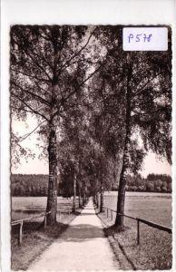 AK Bad Wörishofen Kneippheilbad, Elsterweg 1955 gelaufen