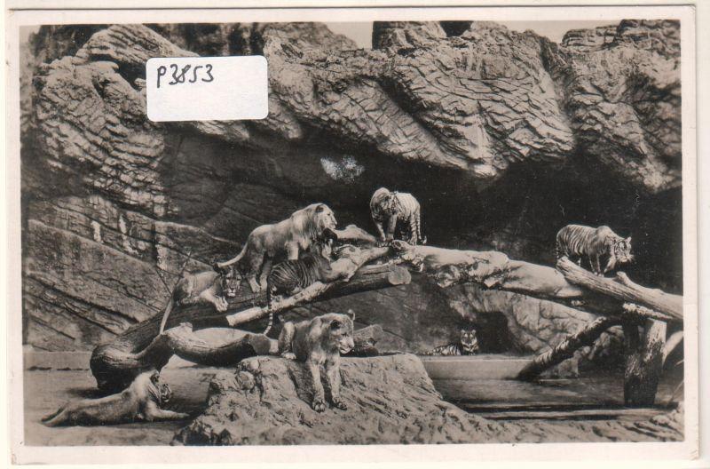 Carl Hagenbeck's Tierpark