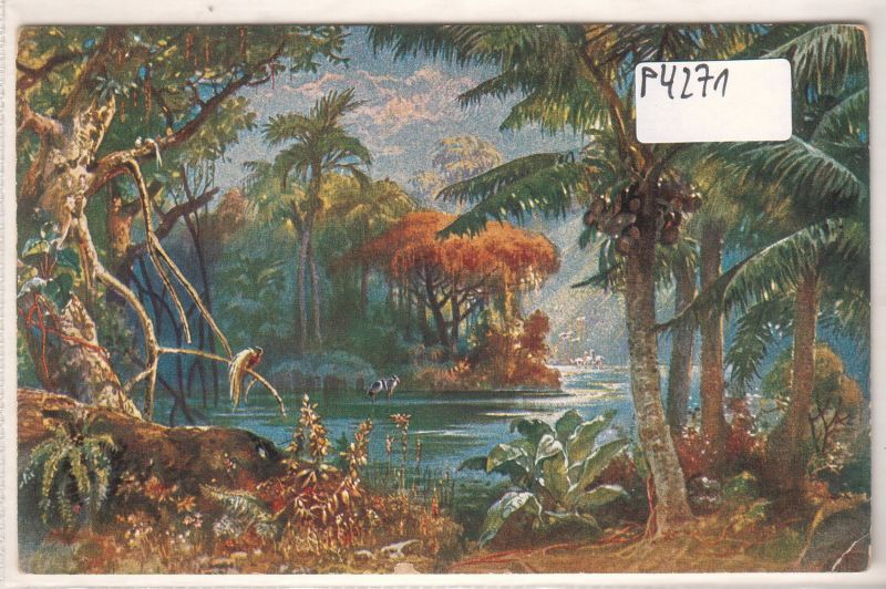 AK Landschaft in Kamerun Kolonialkriegerdank ungelaufen
