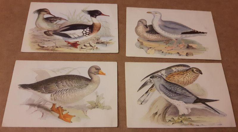Sammelbilder Konvolut - 4 Bilder - Alle Vögel sind schon da ... (Band 2) Serie 11 - Bild 30 Der Kornweih, 42 Die Silbermöwe, 46 Die graue Wildgans, 48 Der Mittelsäger (Preis gilt für alle Bilder zusammen)